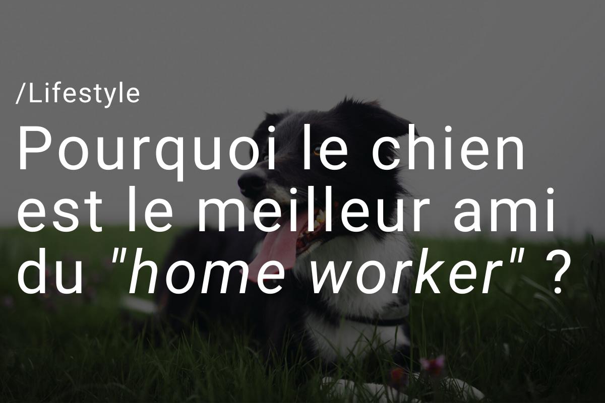 """Pourquoi le chien est le meilleur ami du """"home worker"""" ?"""